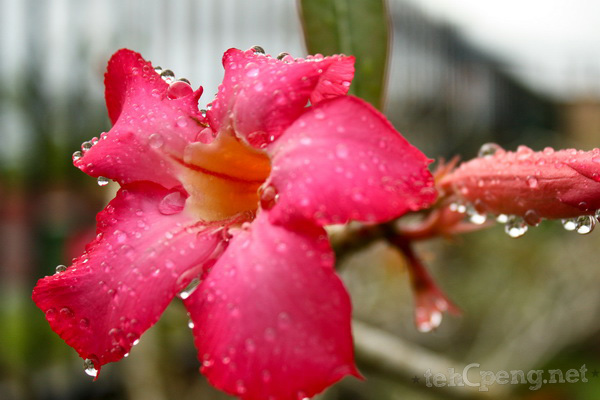Flower in droplets